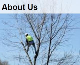 about us , company history,company inforamtion