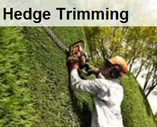 trim hedge, hedge trimming, hedge pruning,