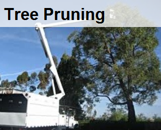 tree pruning, tree trimming , trim large tree, bucket truck,crane tree out