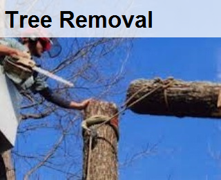 tree removal,tree cutting, cut tree , large tree, remove tree